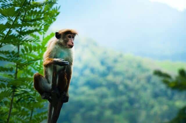 יער הקופים (Jozani Forest Reserve) בזנזיבר