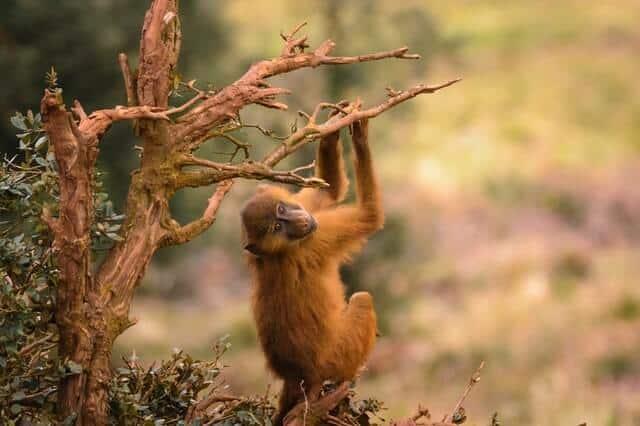 יער הקופים בזנזיבר