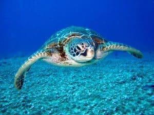 צבי הים של נונגווי - צבי היבשה הענקיים