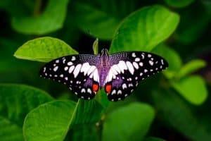 מרכז הפרפרים של זנזיבר - מה צריך לדעת