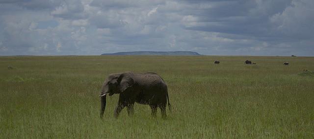 אפריקה - טנזניה - טיול ספארי