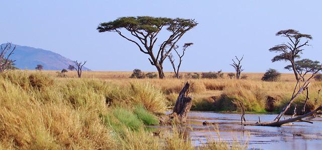 שבוע טנזניה